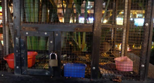bols de nourriture et d'eau dans une cage d'oiseau - cage animal nuit photos et images de collection