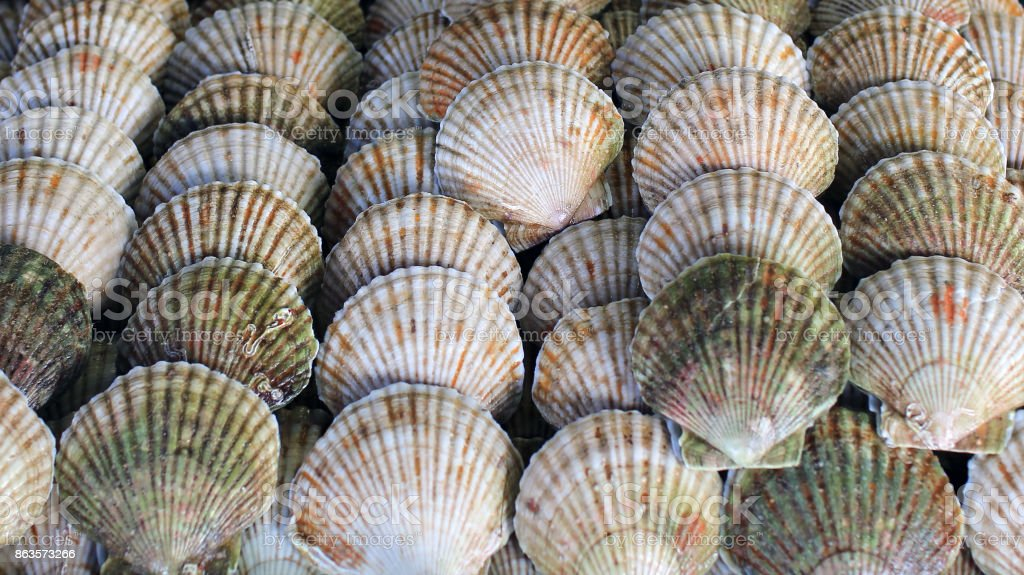 Food background; seafood, scallops close up stock photo