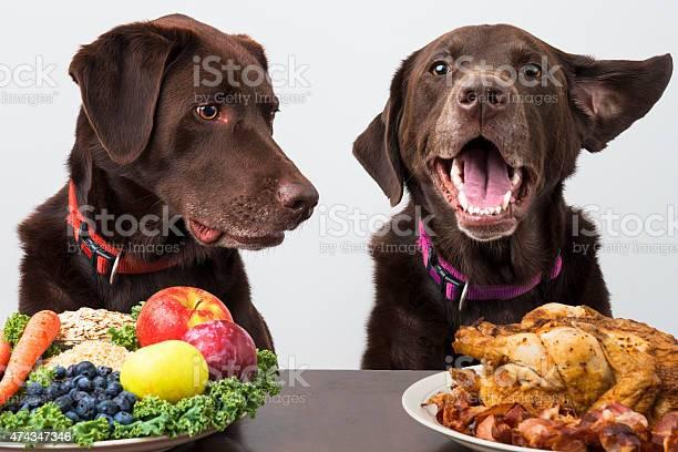 Food diet for pets picture id474347346?b=1&k=6&m=474347346&s=612x612&h=b5elgtxwrt owavqbqvx8 d5dlnzq58wvusk9wr00r4=