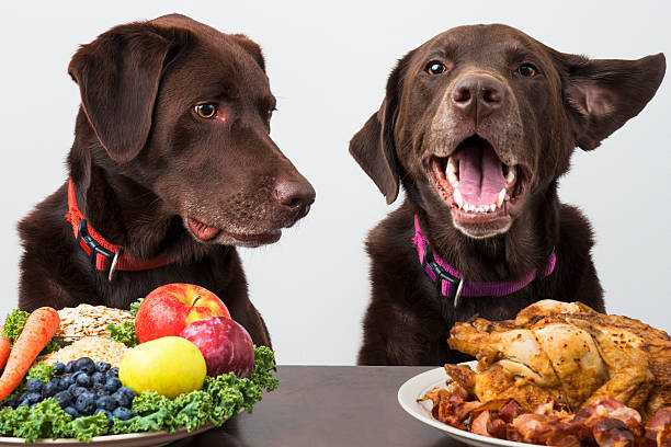 Food diet for pets stock photo