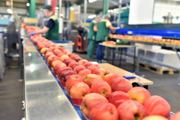 food factory: assembly line with apples and workers stock photo