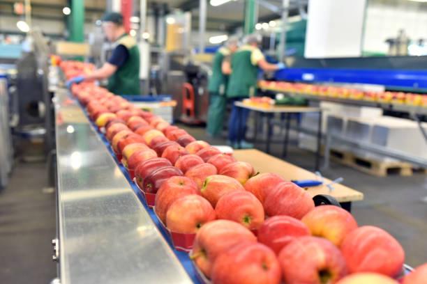 lebensmittelfabrik: fließband mit äpfeln und arbeitern - nahrungsmittelfabrik stock-fotos und bilder