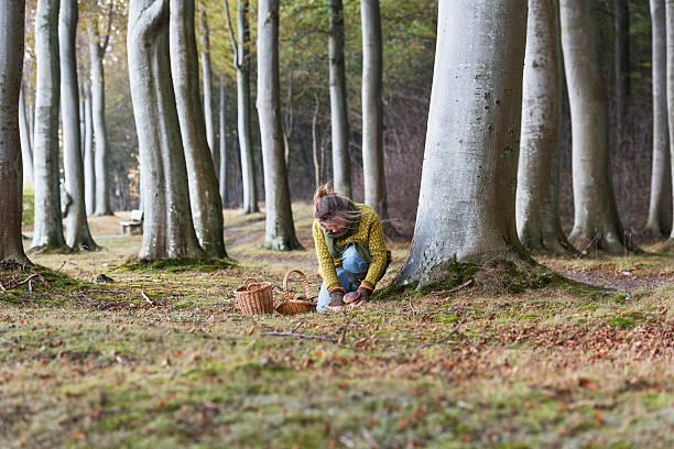 food forager at work in the forest - höst plocka svamp bildbanksfoton och bilder