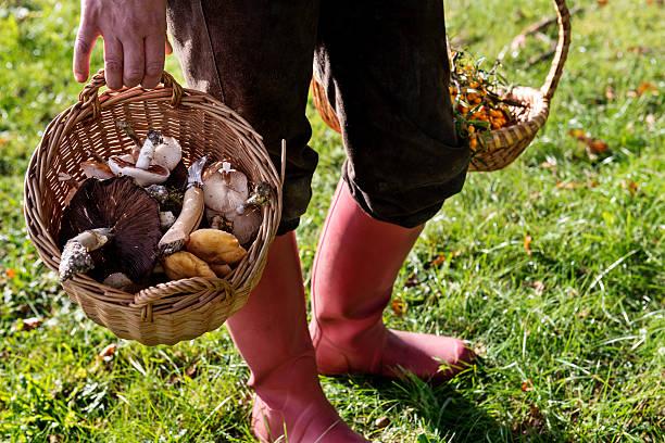 food forager carrying her finds home - höst plocka svamp bildbanksfoton och bilder