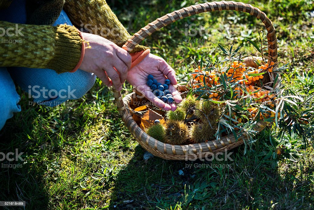 Food Forager in Denmark stock photo