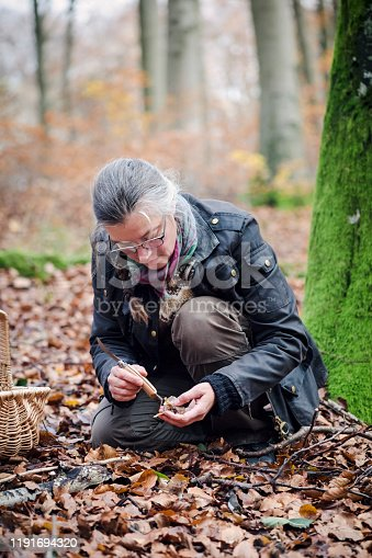 Portrait of a food forager picking and cleaning a mushroom she has found in the forest. Varieties include; chanterelles and hedgehog mushrooms. Food foraging has become popular in recent years as people have turned to foraged food to cook local and seasonally sourced food. Photographed on the island of Mon Denmark. Vertical format, the person is wearing green coloured trousers a Fair Isle style sweater and a waxed jacket.