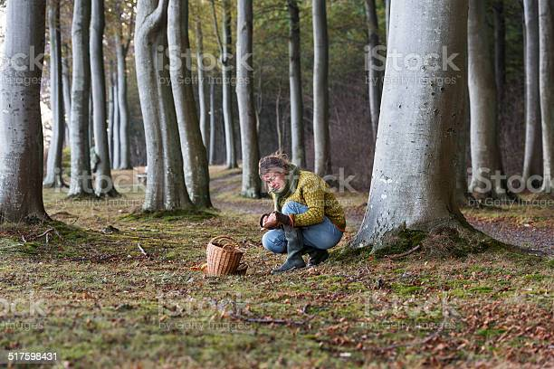 Food forager working in the woods looking for more produce. Food foraging has become popular in recent years as chefs have turned to foraged food to produce local and seasonal menu's. Photographed in Denmark.