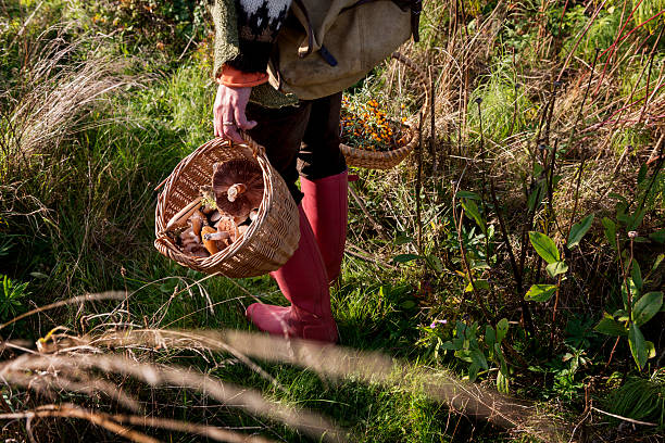 Food Forager Food forager with her haul of foraged food in her baskets. Food foraging has become popular in recent years as chefs have turned to foraged food to produce local and seasonal menu's. Photographed in Denmark. foraging stock pictures, royalty-free photos & images
