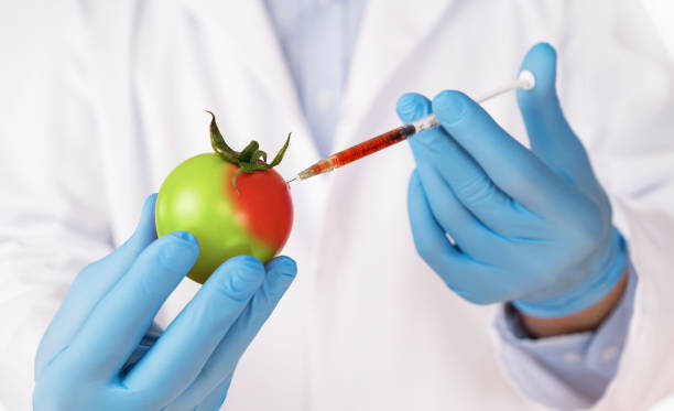 food genetic modification concept - genetic modification stock photos and pictures