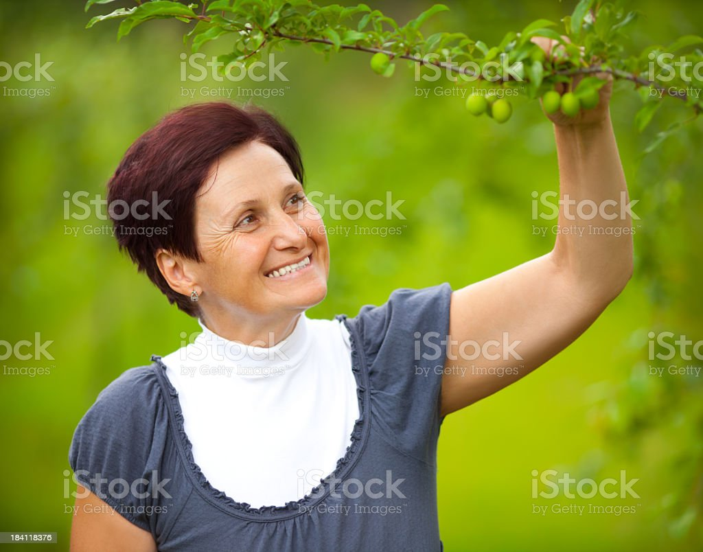 Food growing control royalty-free stock photo