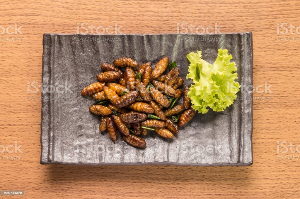 Food insect stock photo