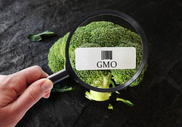 GMO food label Hand with magnifying glass examining broccoli with GMO label genetic modification stock pictures, royalty-free photos & images