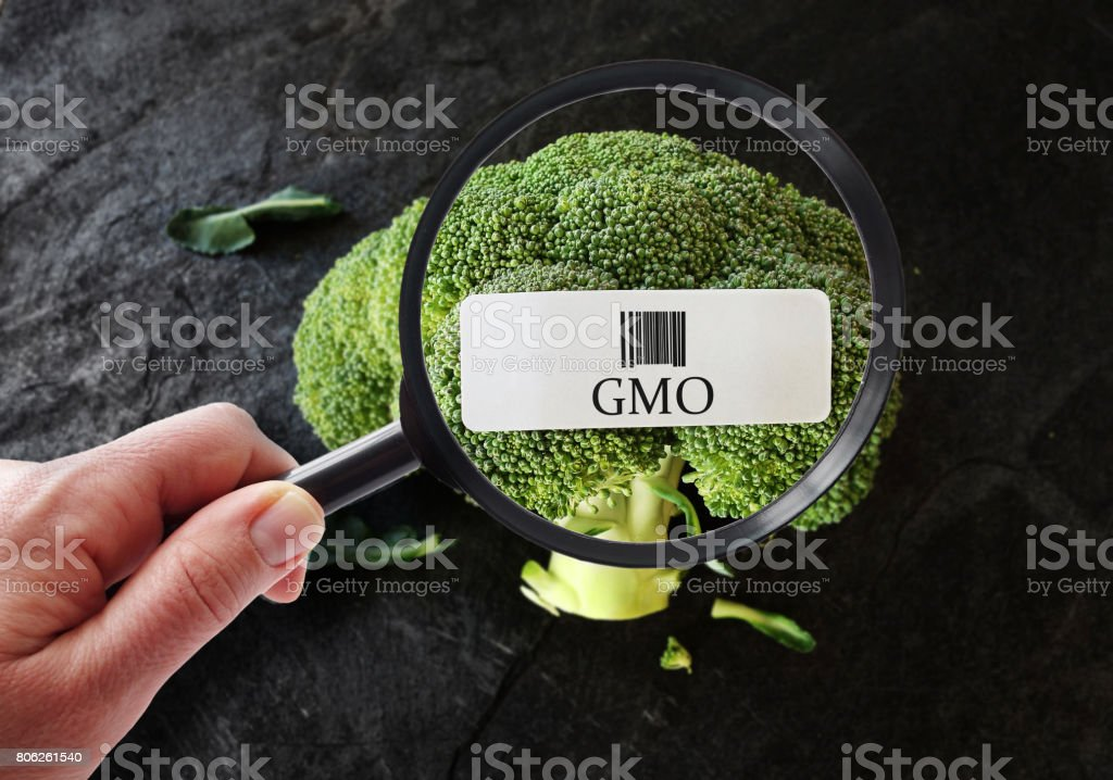 GMO food label stock photo