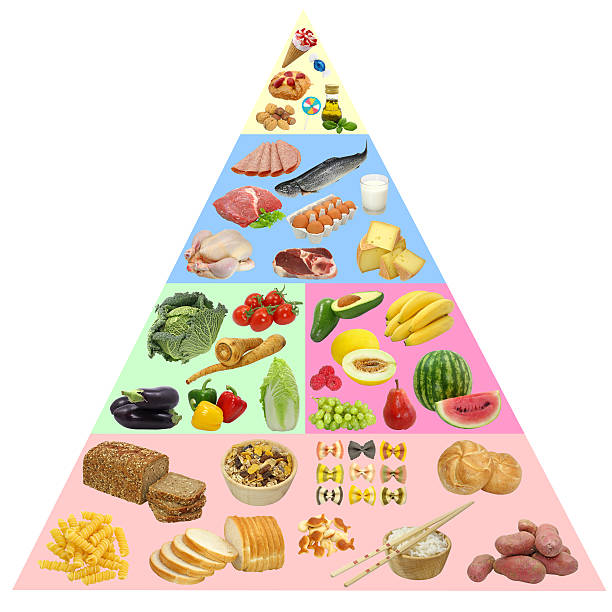 796 Food Pyramid Stock Photos Pictures Royalty Free Images Istock