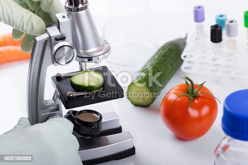 food quality control concept - scientist inspecting cucumber with microscope in laboratory