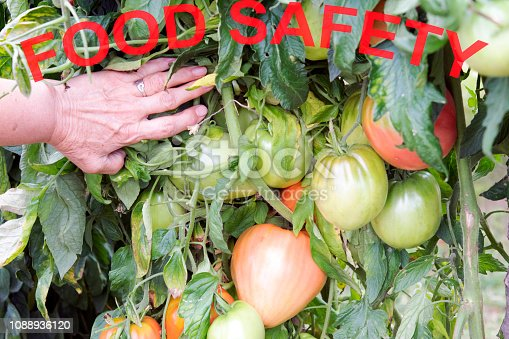 685555238 istock photo Food Safety 1088936120