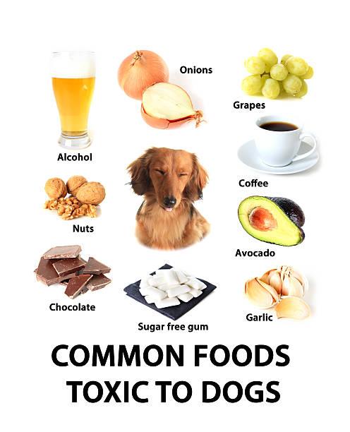 foods giftigen für hunde - zuckerfreie lebensmittel stock-fotos und bilder
