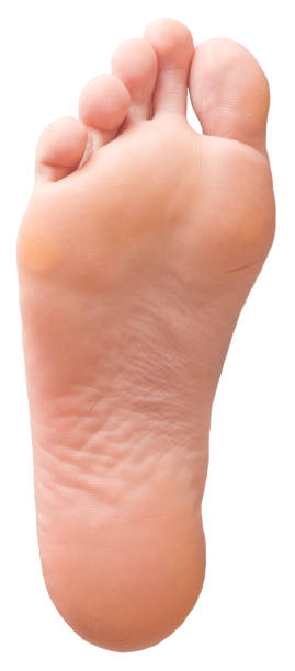 Foot on white Foot isolated on white background sole of foot stock pictures, royalty-free photos & images