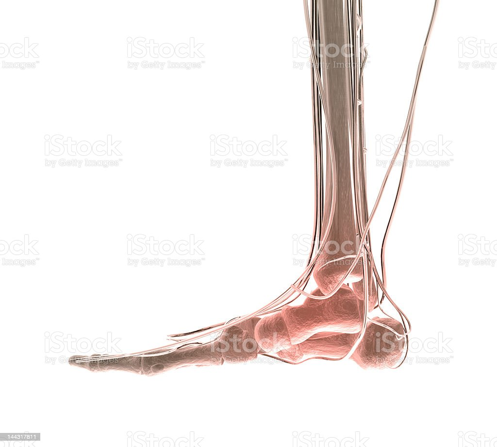 Foot Pain Stock Photo & More Pictures of Anatomy | iStock