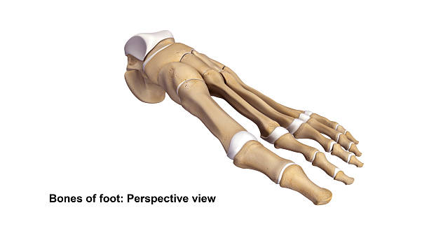 foot perspective view - os du pied photos et images de collection