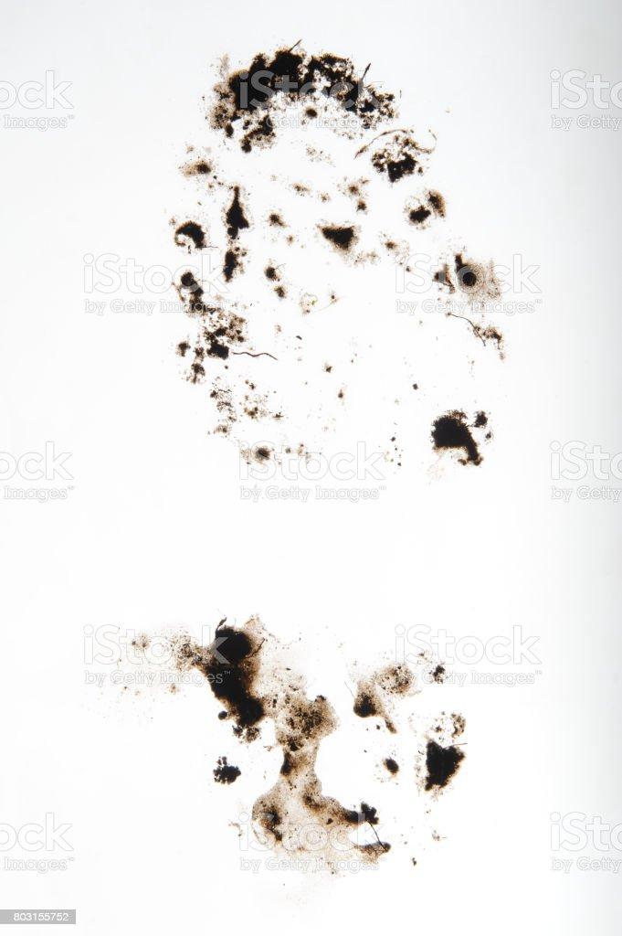 Foot print, Schlamm – Foto