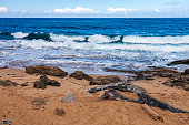Foot Prints on a Rocky Beach, and Heavy Surf rolling in on San Juan Island in Puerto Rico