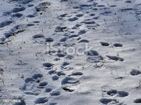 istock Foot steps in snow 1302109406