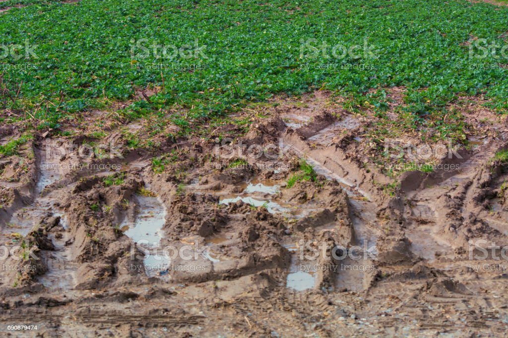 Foot traces and tire marks in the mud stock photo