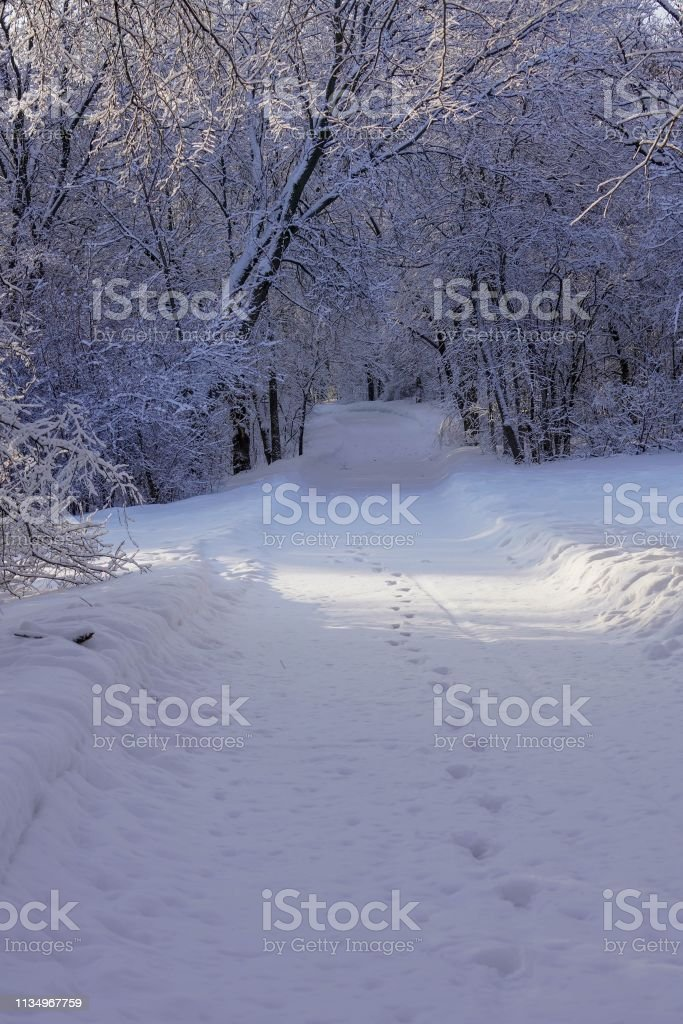 Foot tracks on a walking trail in the snowy woods stock photo