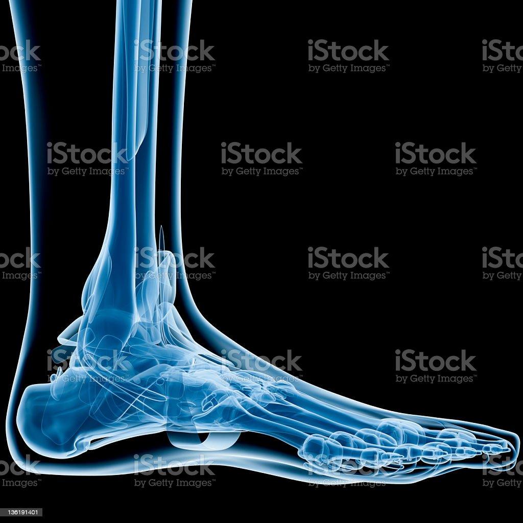 Foot Xray Stock Photo Download Image Now Istock