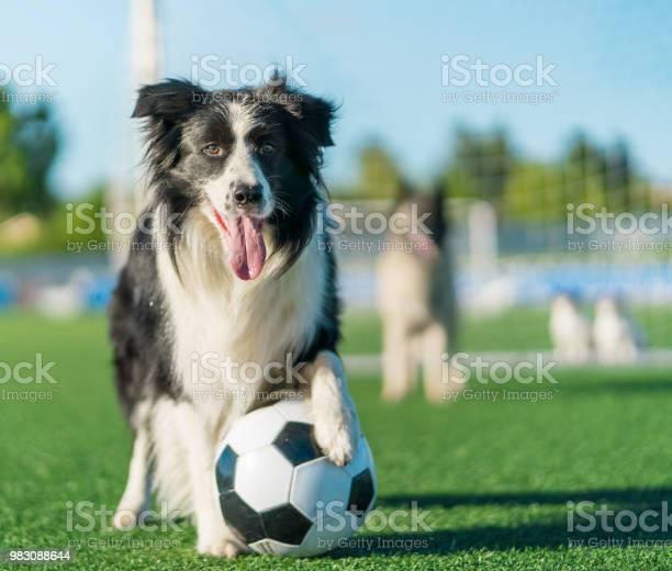 Football dog team picture id983088644?b=1&k=6&m=983088644&s=612x612&h=8xw8idiksb xl9vml1omvcdcccpphyreibcghm2jcou=
