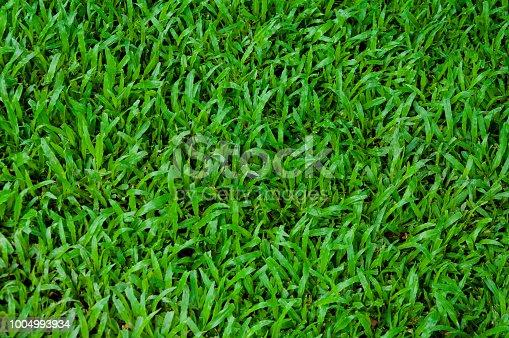 825397576 istock photo Football field green grass pattern texture background 1004993934