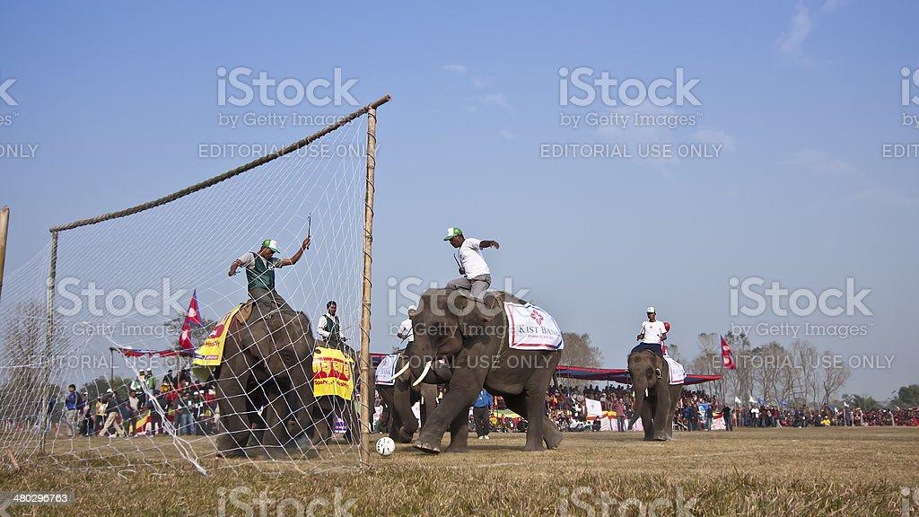 Football game - Elephant festival, Chitwan 2013, Nepal royalty-free stock photo