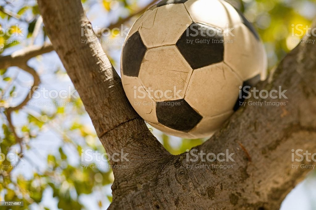 Football in a tree stock photo