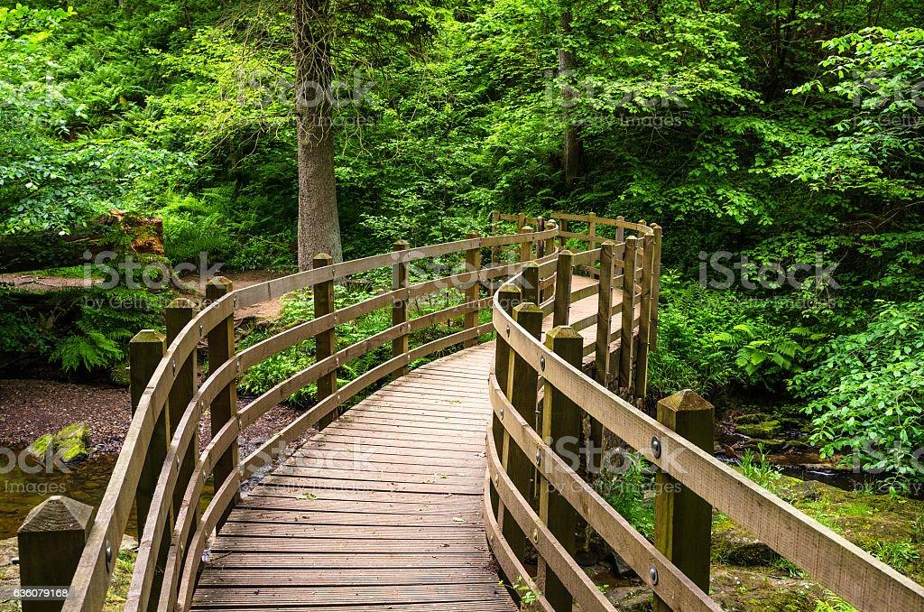 Footbridge along a Forest Path stock photo
