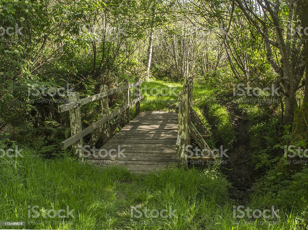 Footbridge along path to Nickel Creek, Redwoods National Park, California royalty-free stock photo