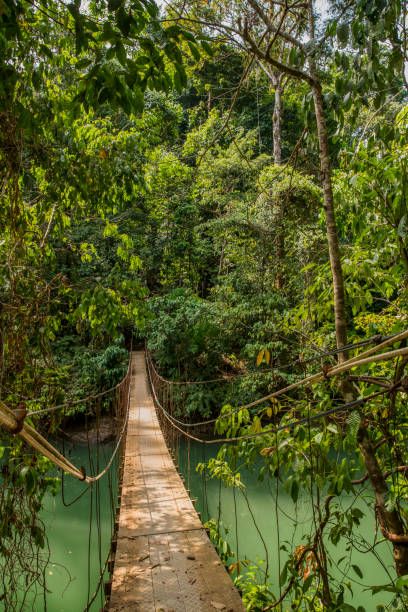 Footbridge amidst trees over river in Costa Rica Footbridge amidst trees over river. Wooden bridge over water in rainforest. Lush foliage in Costa Rica. amidst stock pictures, royalty-free photos & images
