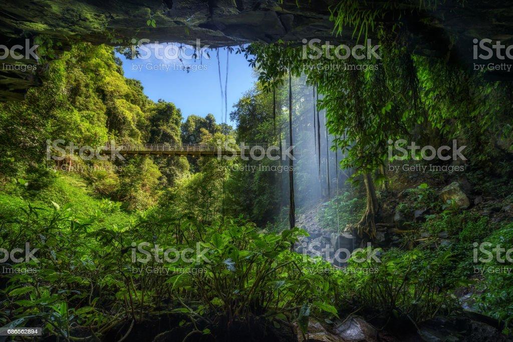 Footbridge and Crystal Falls  in the Rainforest of Dorrigo National Park, Australia stock photo