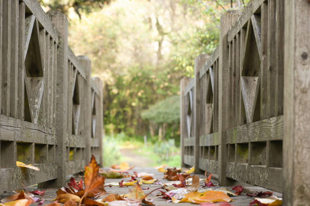 A Footbridge in the Fall a footbridge covered with fall leaves jude beck stock pictures, royalty-free photos & images