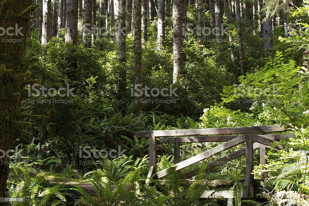 Footbridge in the Forest royalty-free stock photo