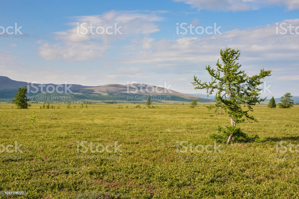 Foothill tundra. stock photo