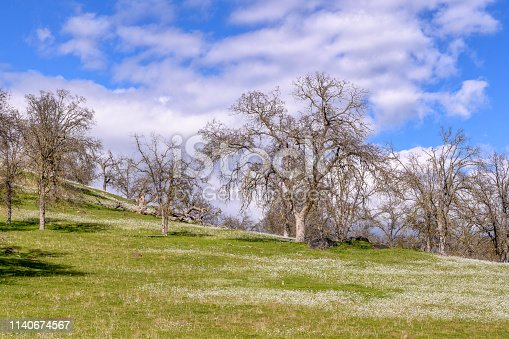 California foothills covered with small white wildflowers.  Taken near Auburn, California, USA.