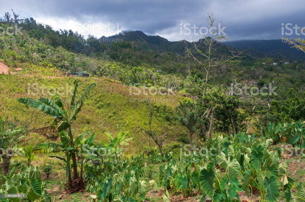 Foothills of Cordillera Central in Jayuya stock photo