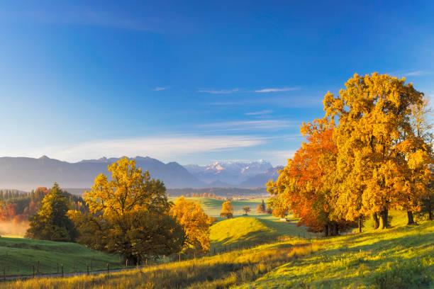 wanderweg am indian summer mit zugspitze im hintergrund - xxl panorama - deutsche bäume stock-fotos und bilder