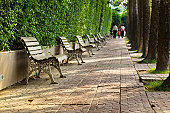 Walkway inside public green park surrounded by small trees and green grass floor. Iron vintage benches put on left and right of walkway.