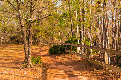 Footpath and thicket in Providence Canyon State Park, Georgia, USA