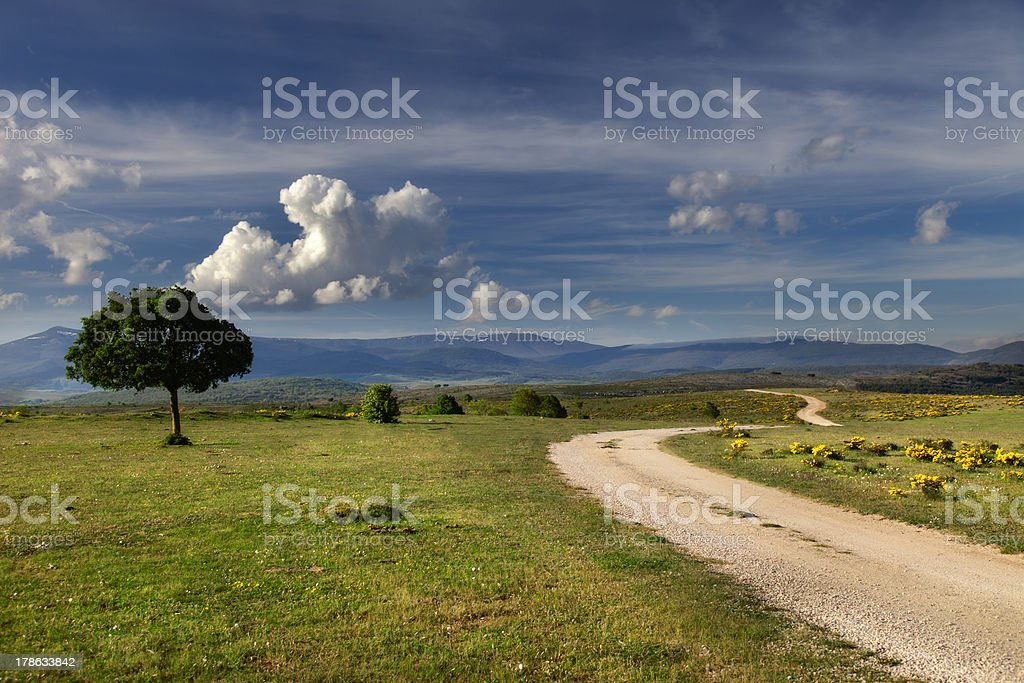 Footpath and tree (Castilla,Spain) stock photo