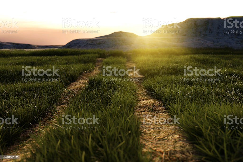 footpath at high grassland in the evening sunshine stock photo