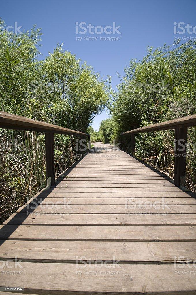 Footpath at Snir Stream national park, Israel royalty-free stock photo