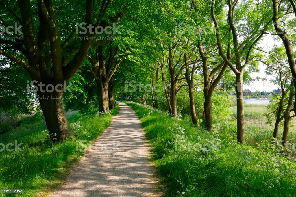 Footpath at the Wilhelmsburg Island (Bunthäuser Spitze), Hamburg stock photo
